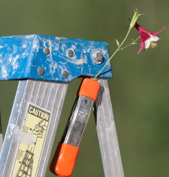 A bit of columbine on a ladder for the hummingbirds photographed By Jeff Wendorff