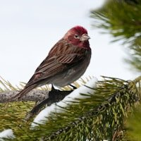 Bird Photography at Yellowstone National Park