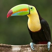 Toucan Photography from Costa Rica