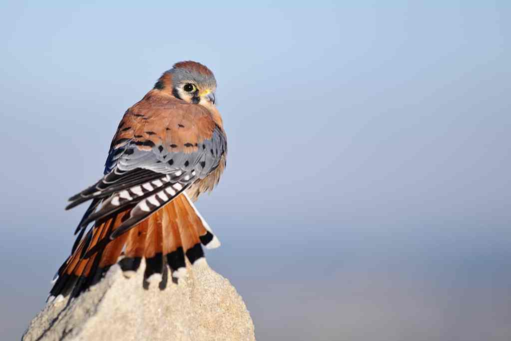 Birds of Prey Workshop Images