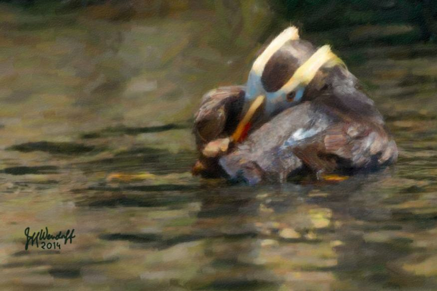 Peeking Puffin - Tufted Puffin created from a photograph by Jeff Wendorff