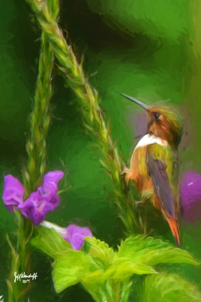 Among the Verbena - Scintillant Hummingbird created from a photograph by Jeff Wendorff