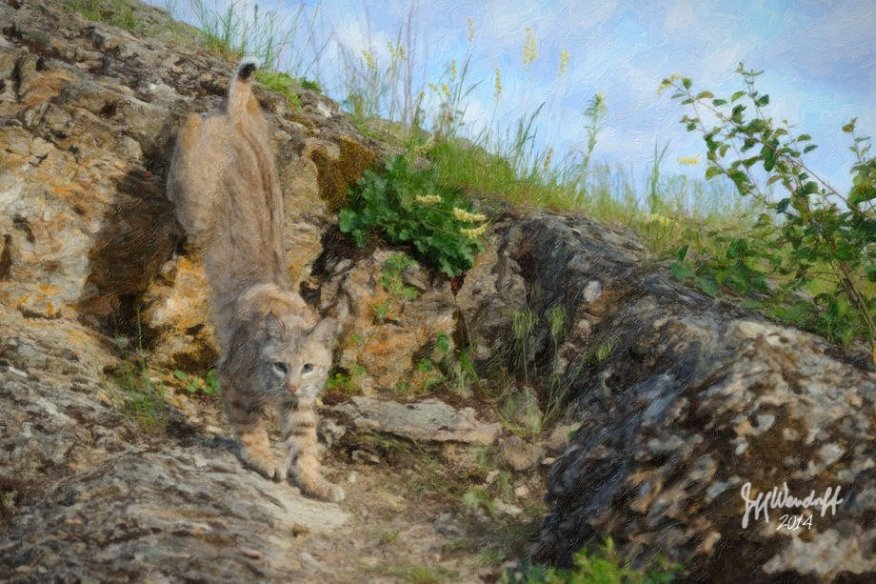 a digital painting of a your bobcat running down a hill created by Jeff Wendorff