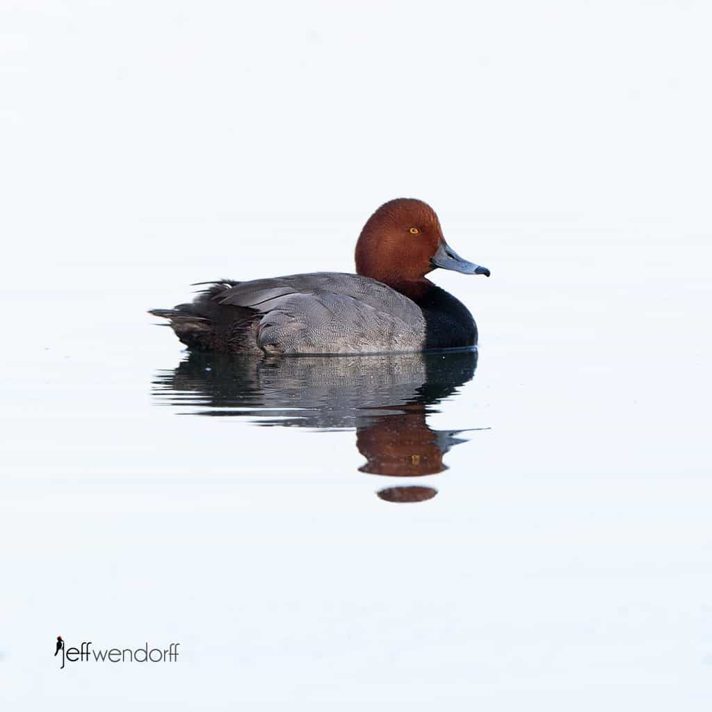 Bird Photography – Henderson Preserve Nevada