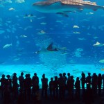 The Manila Ocean Park Nifty Guide