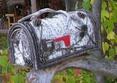 birch_tree_mailbox