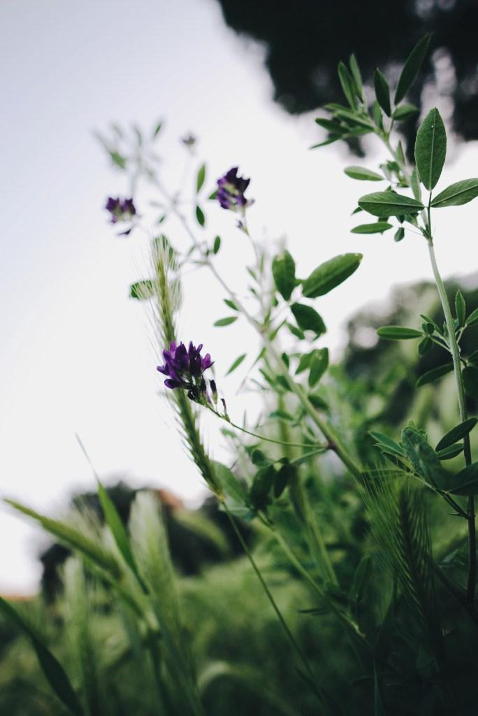 June Nature