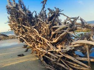 Driftwood - 2