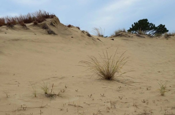 Dunes de sable à Roanoke Island USA
