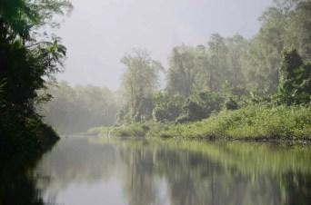 Marais de Kaw, Guyane