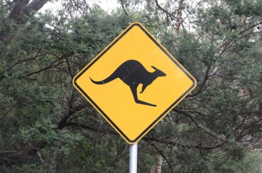 Panneau attention aux kangourous Australie