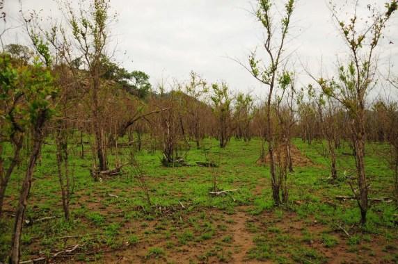 Tapis dans la savane au Kruger Park Afrique du Sud