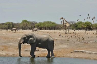 Point d'eau à Etosha Namibie