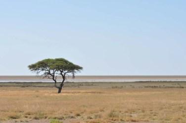 Paysage de savane Etosha Namibie