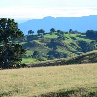 Collines à Matamata Nouvelle Zélande