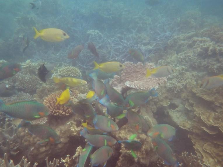 Poissons et coraux