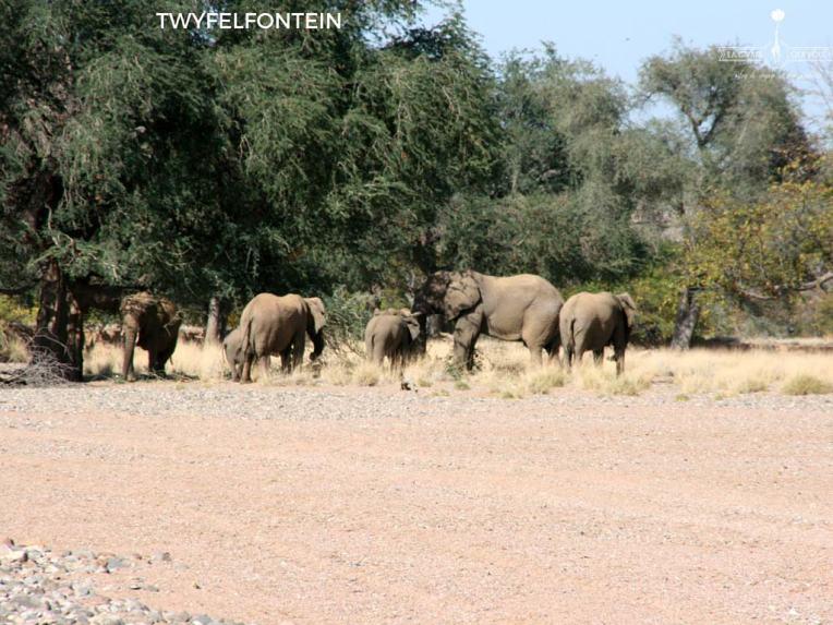 Eléphants de Twyfelfontein