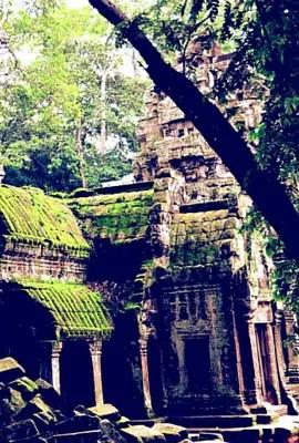 Perdu dans la jungle d'Angkor