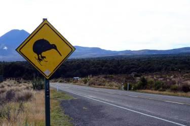 Panneau kiwis Nouvelle Zélande
