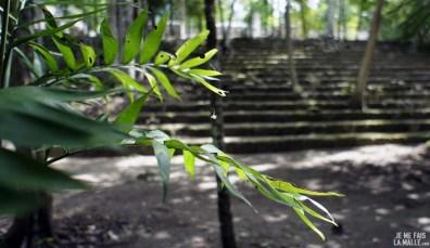 Ambiance jungle à Calakmul