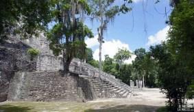 Temple boisé à Calakmul