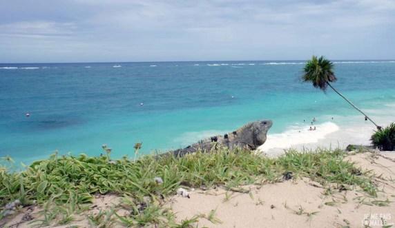 Iguane de Tulum