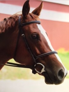Rose's horse
