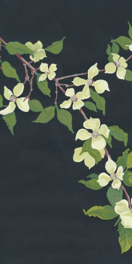 Artist Jen Bell's Dogwood Tree Illustration