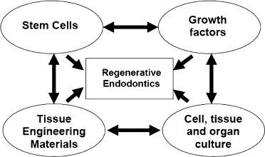 Regenerative Endodontics: A Review of Current Status and a