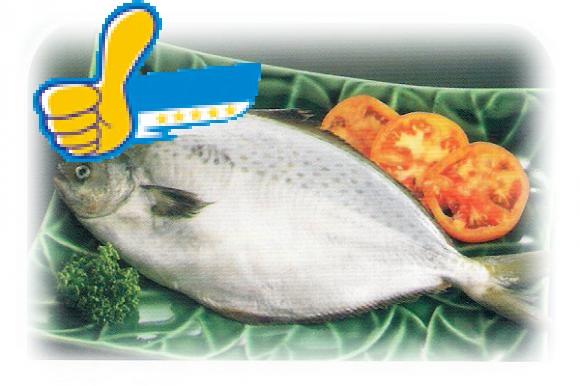 花鯧-冷凍食品-正益魚行 / 正賓商行 生鮮冷凍食品批發-