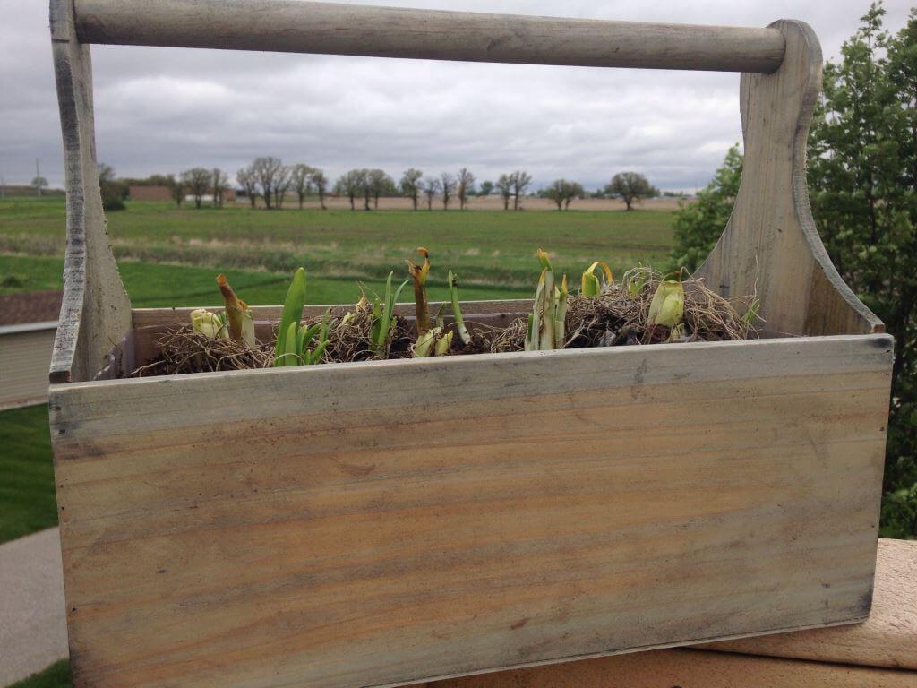 Spring Garden Toolbox ProPlants