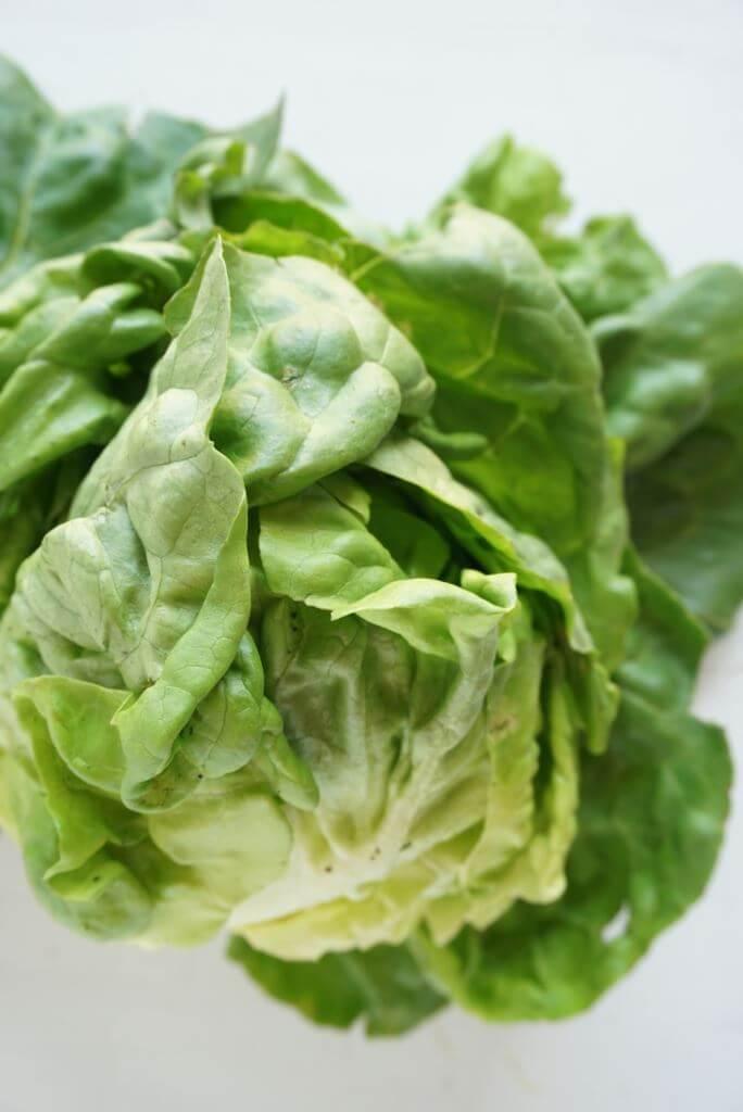 Butter Leaf Lettuce