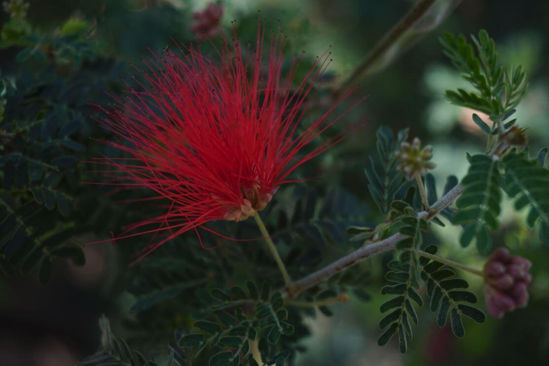 Us Botanical Garden Red Flower