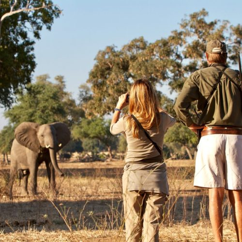 Greater Kruger Walking Trek