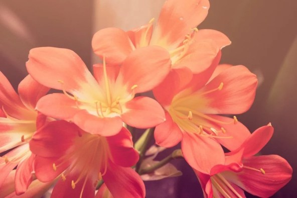 nature-sunny-red-flowers-large