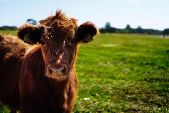 viande et alimentation consciente