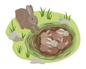 JRiggs_DKBabyAnimals_bunnies1