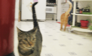 See the way Nermal's being cute while Gus is begging for food?  It totally fits.