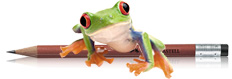 Frog Jennifer Holland Author