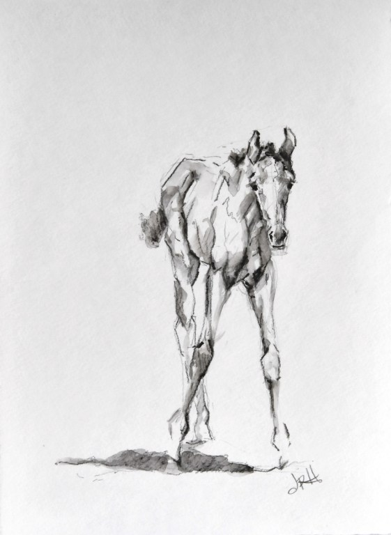foal-sketch-watercolor