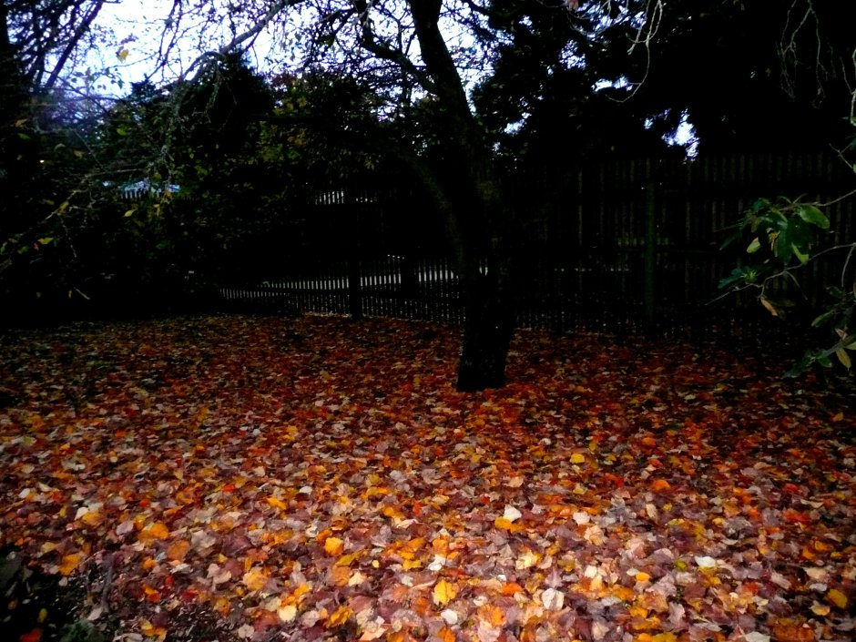 autumn leaves bed ©www.jenniferramirezbaulch.com