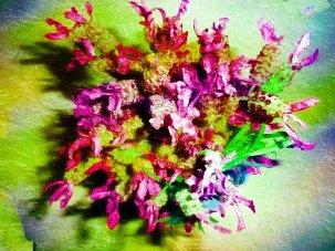 lavender painted