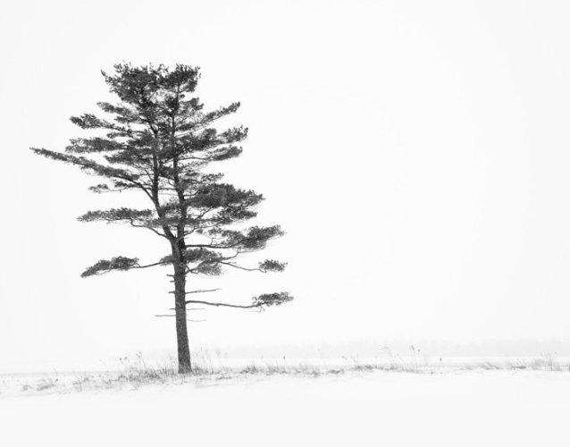 Black and White Tree Print - Porcelain Nest