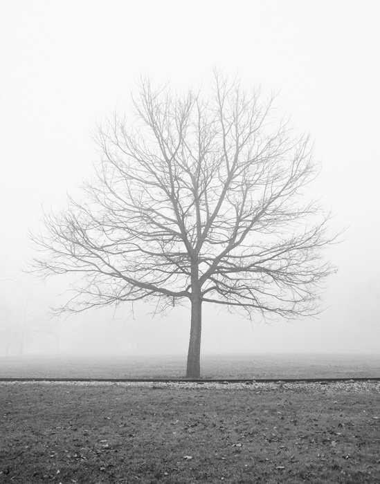 Black and White Landscape Art Prints - Vanilla Dream, Autumn Fog