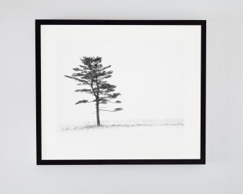 Black and White Tree Print in a Black Frame - Porcelain Nest by Jennifer Squires