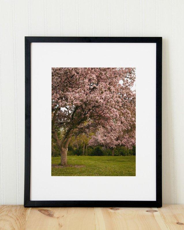 Magic Garden - Pink Flower Tree Photograph