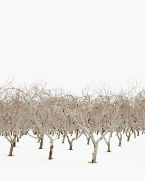 Winter Landscape Photography - Latent Beauty