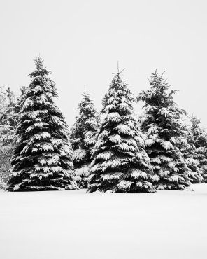 Winter Landscape Photography - Watched You Disappear