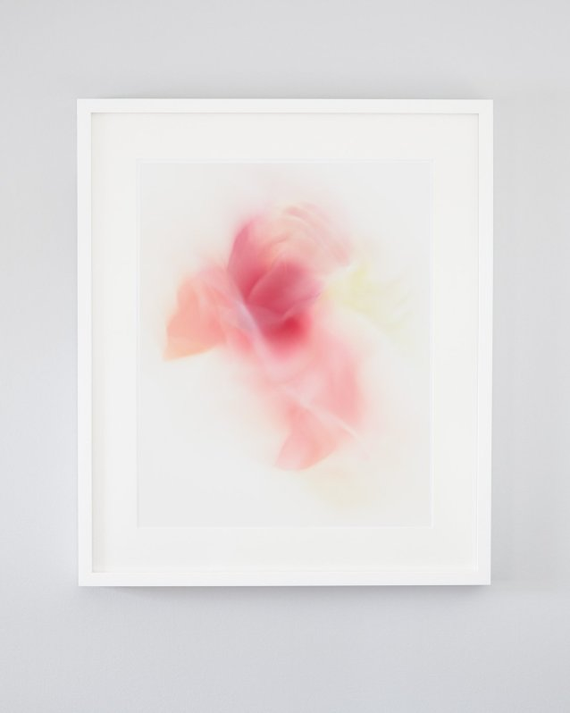 Alisha - Pink abstract flower art made of streaks from spring tulips