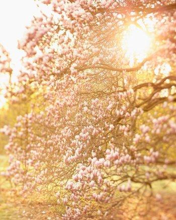 Memories of Granny - Mangolia Tree Photography